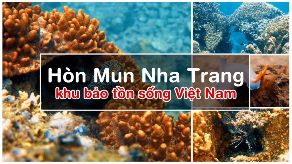 Lặn Biển Hòn Mun Nha Trang