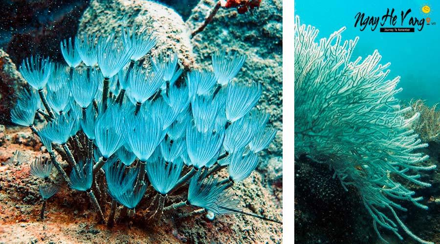 Review Tour lặn biển ngắm san hô Nha Trang