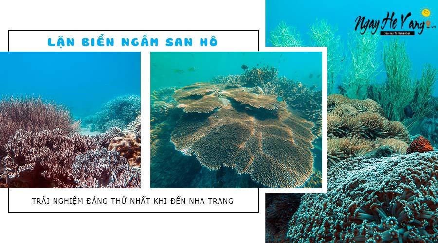 Rạng san hô trong tour lặn biển Hòn Mun