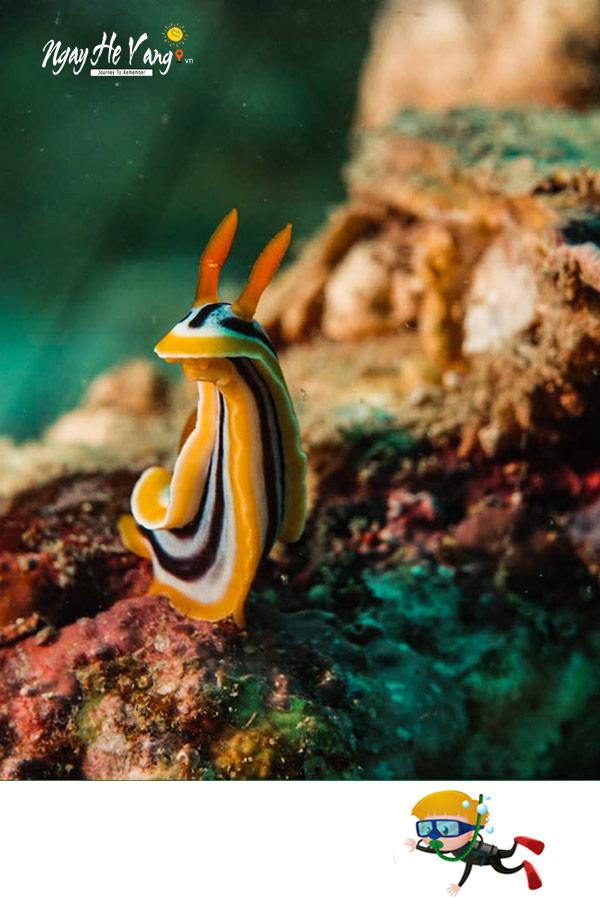 Sinh vật biển tại Hòn Mun