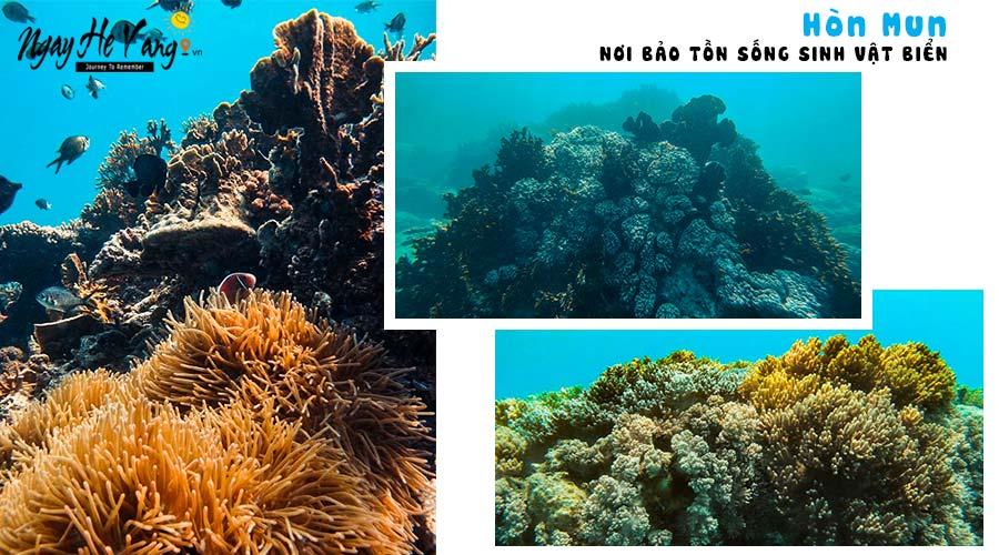 Rạn san hô tại Hòn Mun