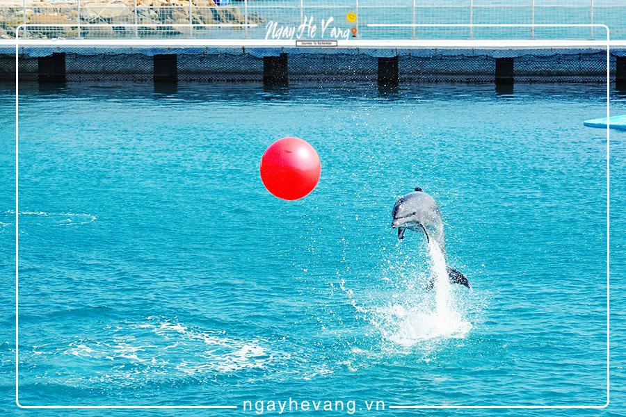 Xiếc cá heo & hải cẩu Vinpearl Nha Trang