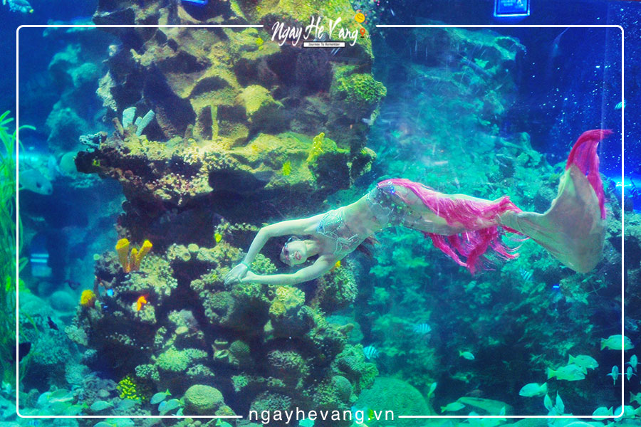 Biểu diễn nàng tiên cá Vinpearl Nha Trang