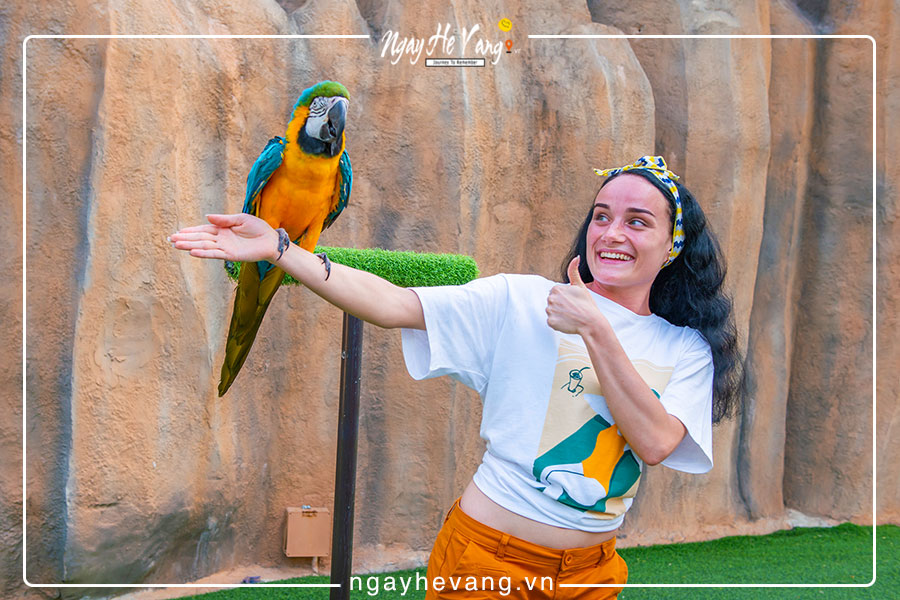Biểu diễn chim Vinpearl Nha Trang